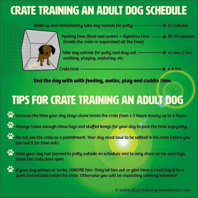 Pet Training  Learn How to Train Your Dog Cat Bird and